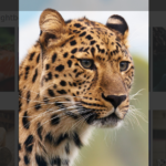 Envira Gallery review 2021 – A feature rich WP Gallery plugin